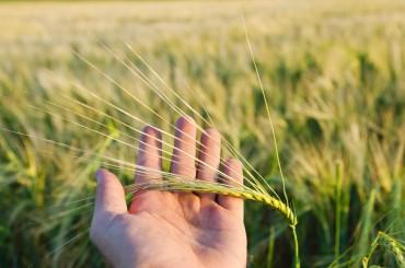 Επιδοτήσεις έως 50.000 ευρώ από το ΕΣΠΑ σε αγρότες