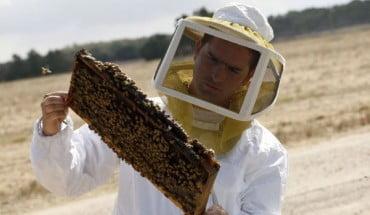 1,2 εκατ. ευρώ στους μελισσοκομικούς συνεταιρισμούς