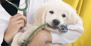 Κτηνίατρος στο Ελληνικό Ινστιτούτο Παστέρ