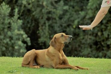 Πρόγραμμα εκπαίδευσης σκύλων στον Δήμο Αγίας Βαρβάρας