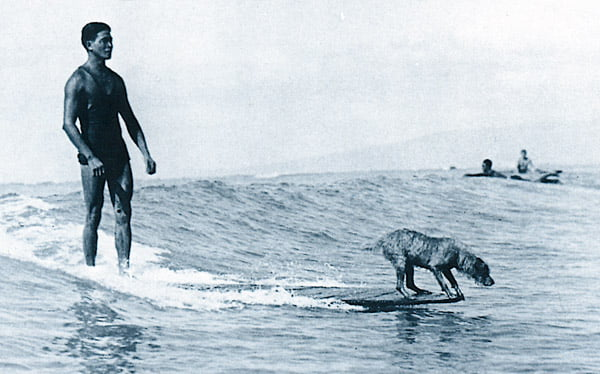 surfer_dog.jpg