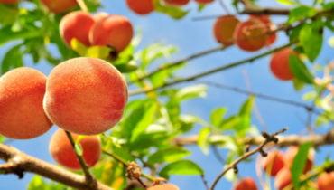 Δωρεάν εργαστήρια βιολογικής γεωργίας για ανέργους από το ΑΠΘ