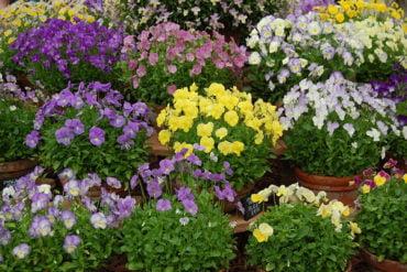 Δωρεάν διανομή φυτών από το Φυτώριο του Δήμου Ελευσίνας