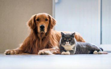 Αλλάζει ο νόμος για τα κατοικίδια ζώα