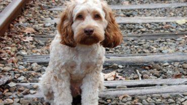 Το πρώτο πάρκο σκύλων ανοίγει στο Ηράκλειο Κρήτης