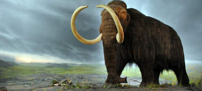 woolly_mammoth-708.jpg